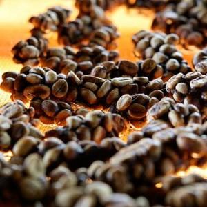 civet-coffee-kopi-luwak-kahvesi